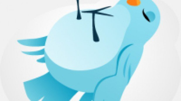 sleeping-twitter-bird