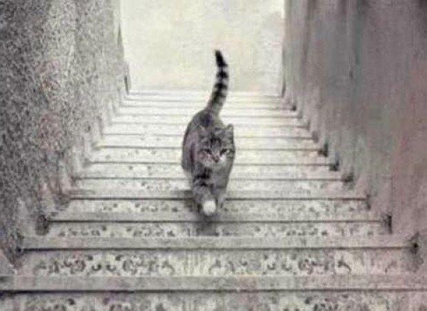 gato-sube-baja--644x362