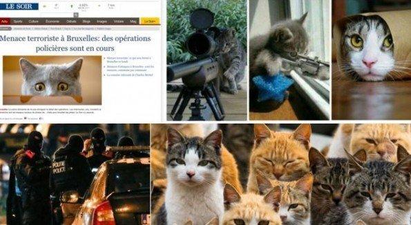 gatitos_bruselas
