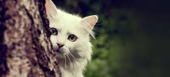 Las personas a las que les gustan los gatos son más infelices