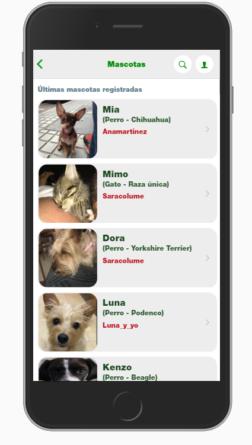 social animals mascotas