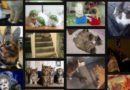 Cómo convertir vídeos en archivos GIF de alta calidad