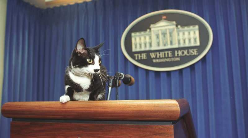Socks, el gato de los Clinton