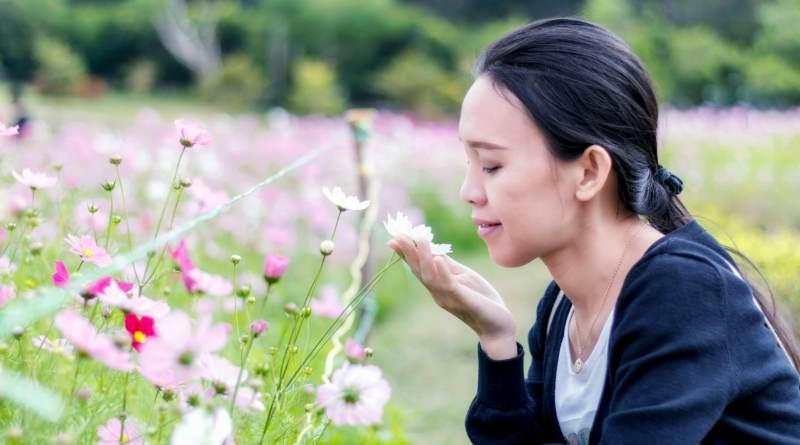Flores Olores