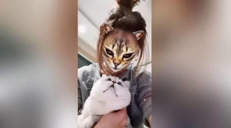 Cara de Gato Instagram