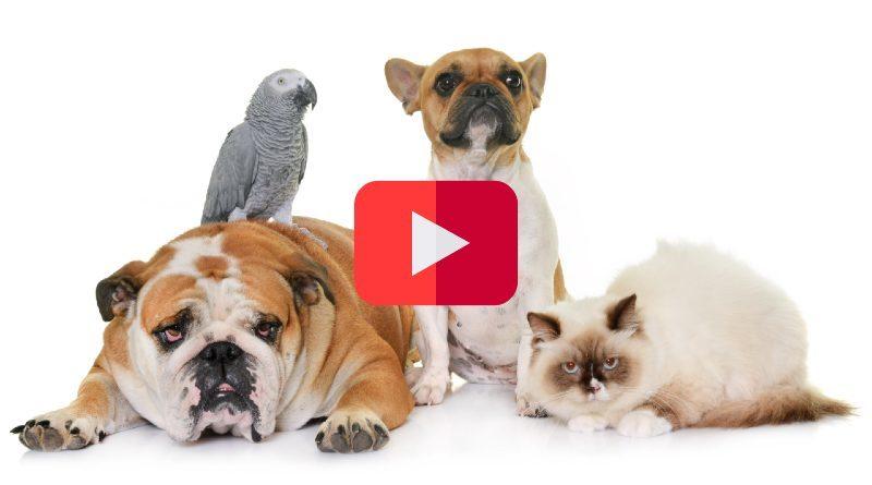 Canales de YouTube Mascotas