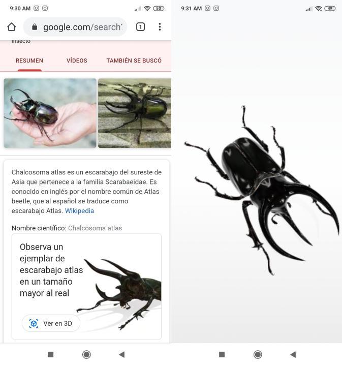 Insectos realidad aumentada Google